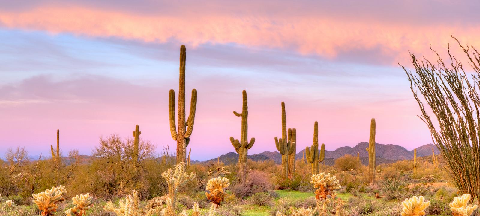 Tucson, AZ #4489