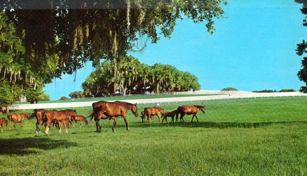 Flagler Beach, FL #4547