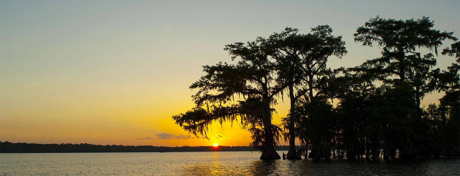 South Louisiana #4595