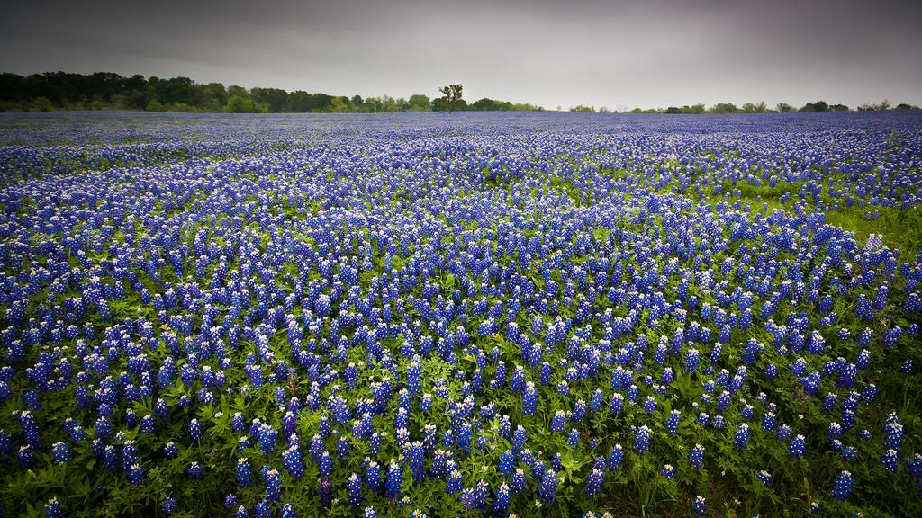 Spring, TX #4611