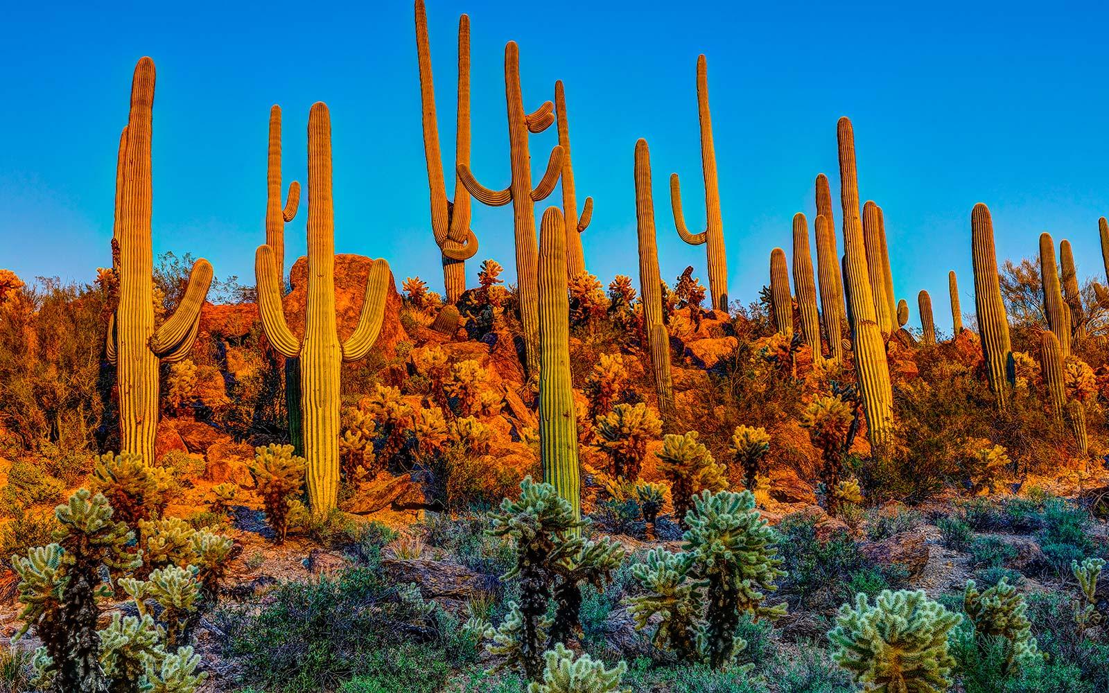 Scottsdale, AZ #4735